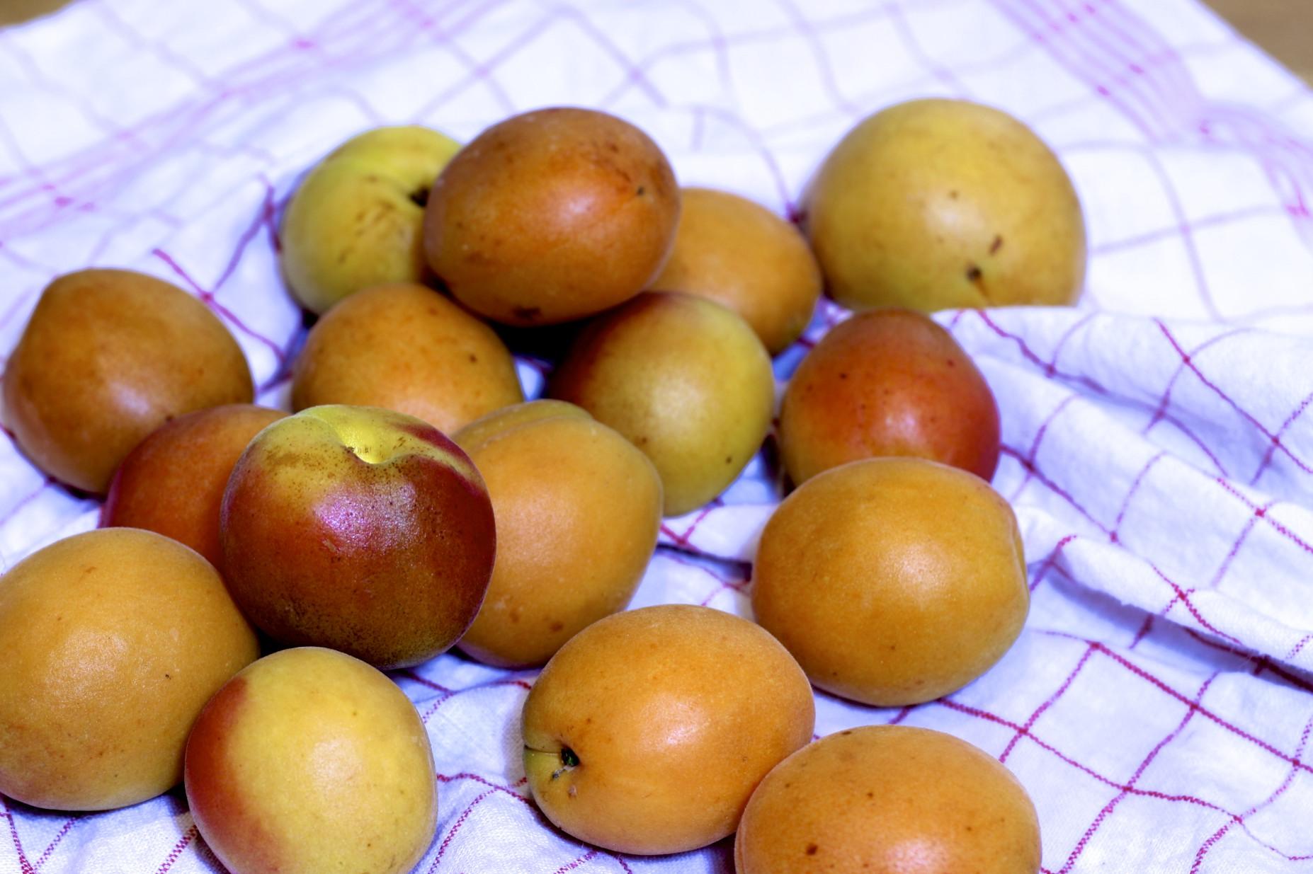 Aprikosenmarmelade mit Haselnüssen